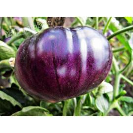 بذر گوجه آبی امریکایی